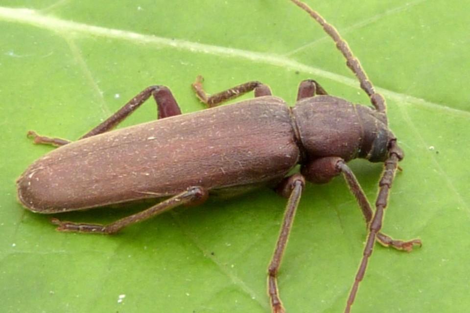 insektpol